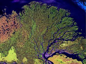 NASA image of the Lena Delta