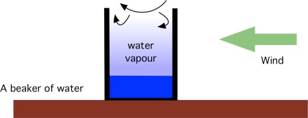 Air flow over a beaker constantly removes evaporated molecules near the mouth of the beaker. But lower down inside the beaker the air is less disturbed, and the amount of vapour in the air is in balance with rate at which molecules leave the liquid surface.