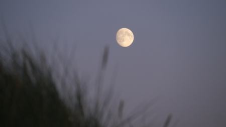 The Moon photographed above some beach grass in Northumberland